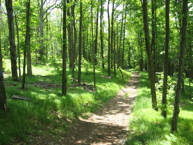 Great Walking Trail Day Out - 10am on Sat, 1st March, 2014