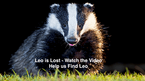 Leo is Lost – Badger Missing